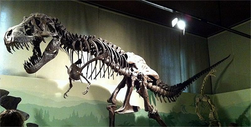 museo_storia_naturale milano_800x407