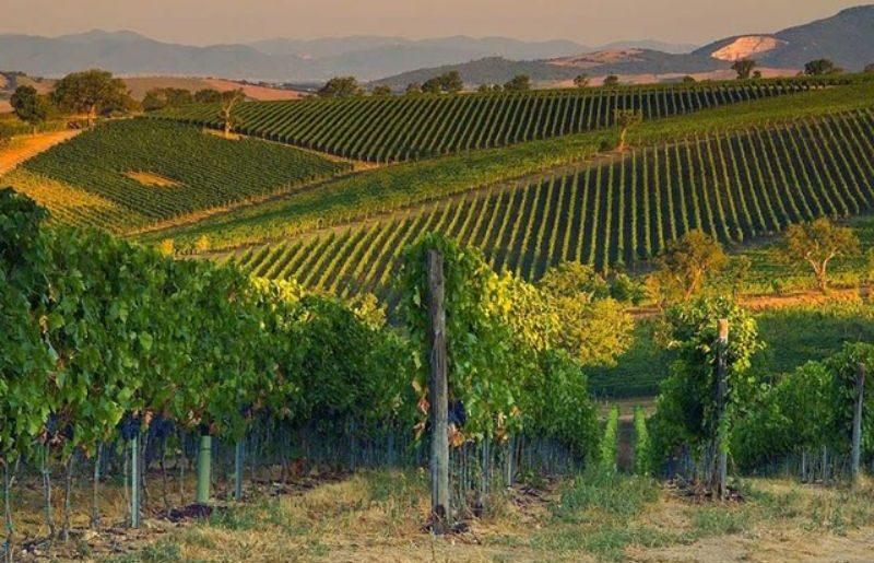 morellino di scansano vini perbacco_800x531