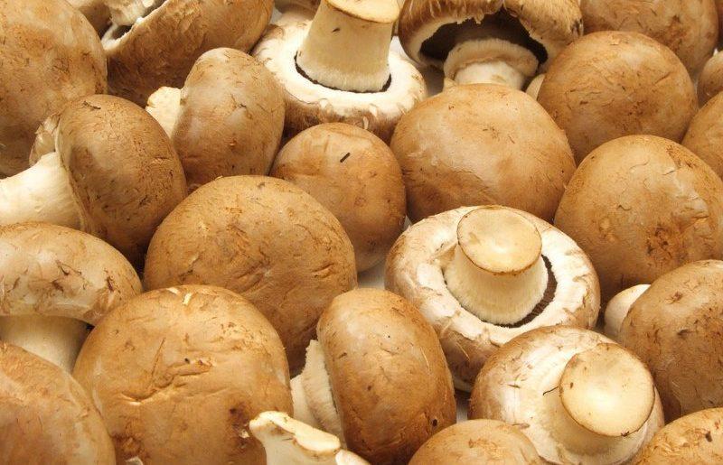 sinti da intossicazione funghi simili a champignon